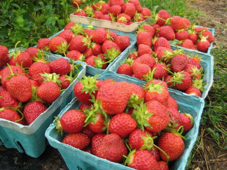 [strawberries.jpg]