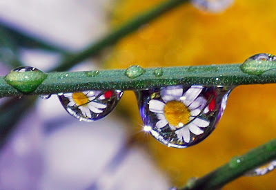 sparklin' drops of spring by Steve took it from flickr (CC-NC-SA)