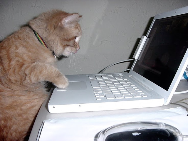 Koma is a Mac Addict by Pixteca MX【ツ】 from flickr (CC-BY)