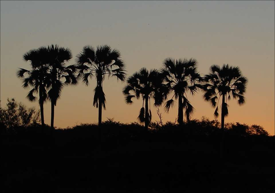 [duba+palms+in+sunset+to+be+printed.jpg]