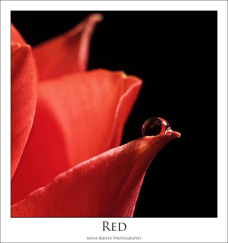 [April+24+~+Red+P.jpg]