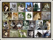alle honden van toen en nu