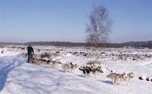 Rennen in de sneeuw