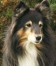 Ronja 17-02-2008; 14½ år gammel