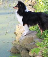 Rina ved dammen