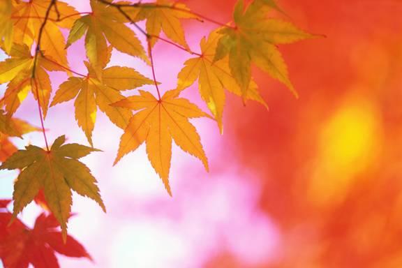 [Fall+Leaves]