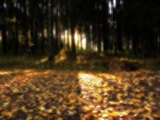 ruduo, lapai, geltoni