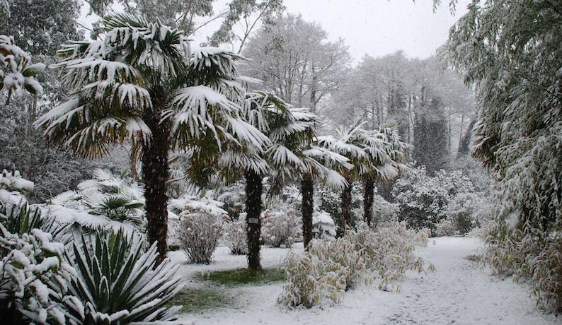 Palmen Im Schnee