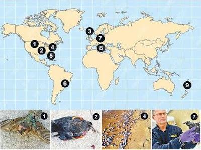 E Peter Blog: Google特設「死亡地圖」 歐美相繼發現死鳥死魚