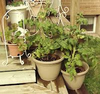 Fancy Shmancy Garden