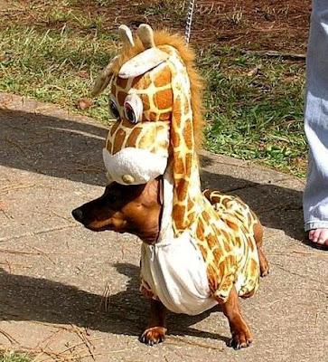 halloween dog costume giraffe