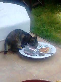 öğle yemeğini yiyen kedi