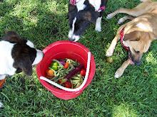 veggie dogs