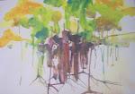 Emmett's Tree 1