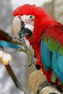 World Bird Sanctuary: Adopt a Bird Spotlight: McCoy (Green