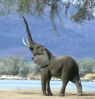 Mr. Ficks Page: Animal Adaptations Webquest