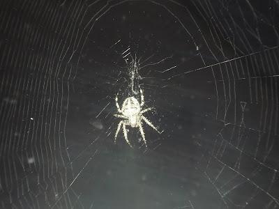 Klitze Kleine Spinne