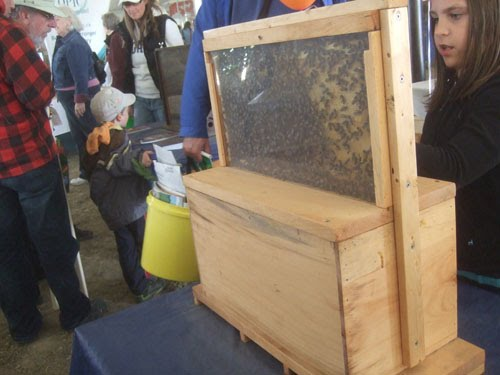 The Bee Journal Ulster Observation Hive