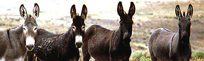 [Copy+of+BURROS.jpg]
