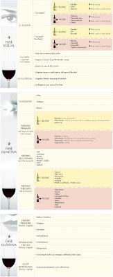 esquema tast de vins blancs i negres
