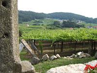 Plantación de cepas albariño en Do Ferreiro