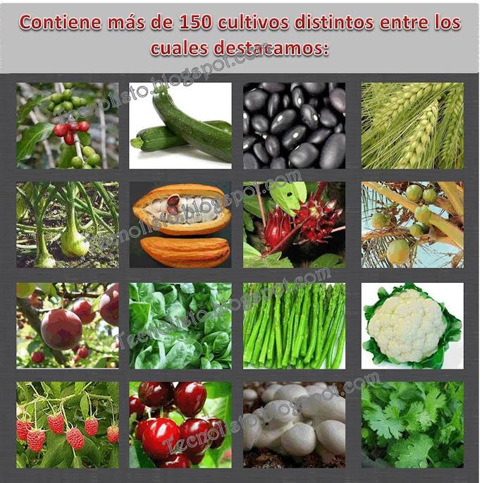 """""""Cultivo de Frutas y Hortalizas3"""""""