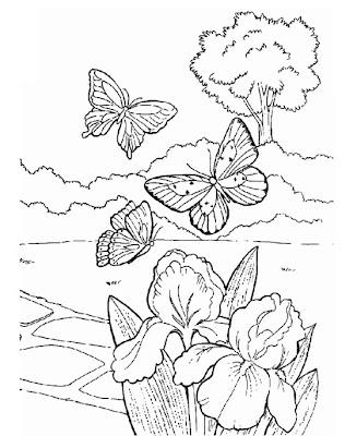 desenhos de natureza para colorir borboleta para pintar