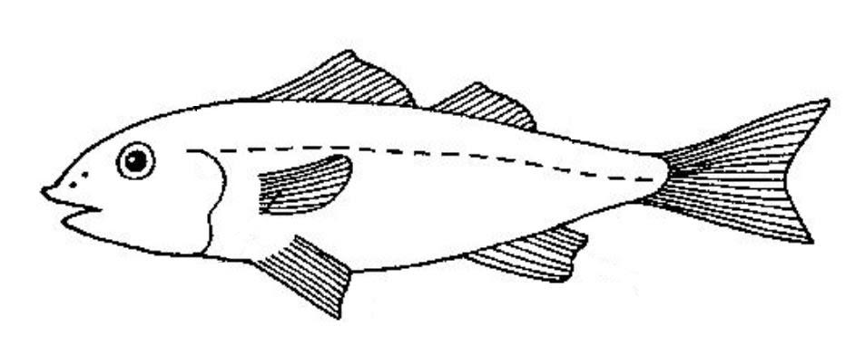 Desenhos De Peixes Para Colorir E Imprimir Animais