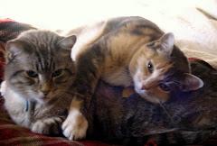 Pangor & Daphne