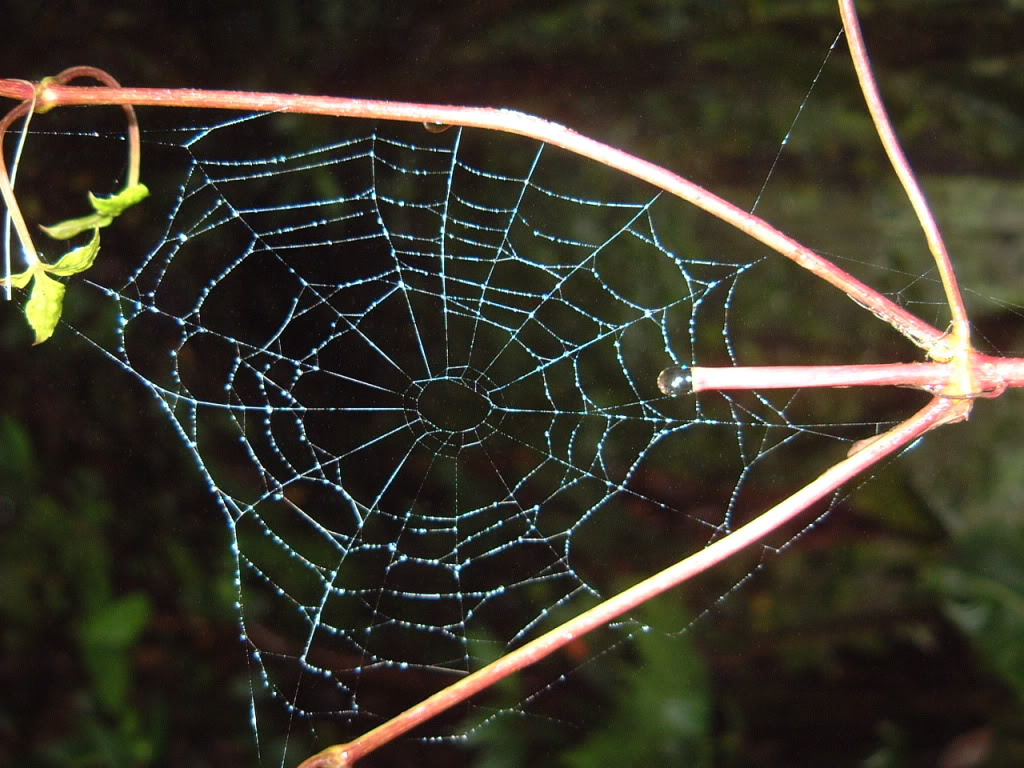 Kitty And Me Designs: Crazy Quilt Spider Web Tutorial