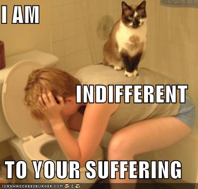 Chibi Station! - Page 3 Funny-pictures-cat-on-vomiting-person