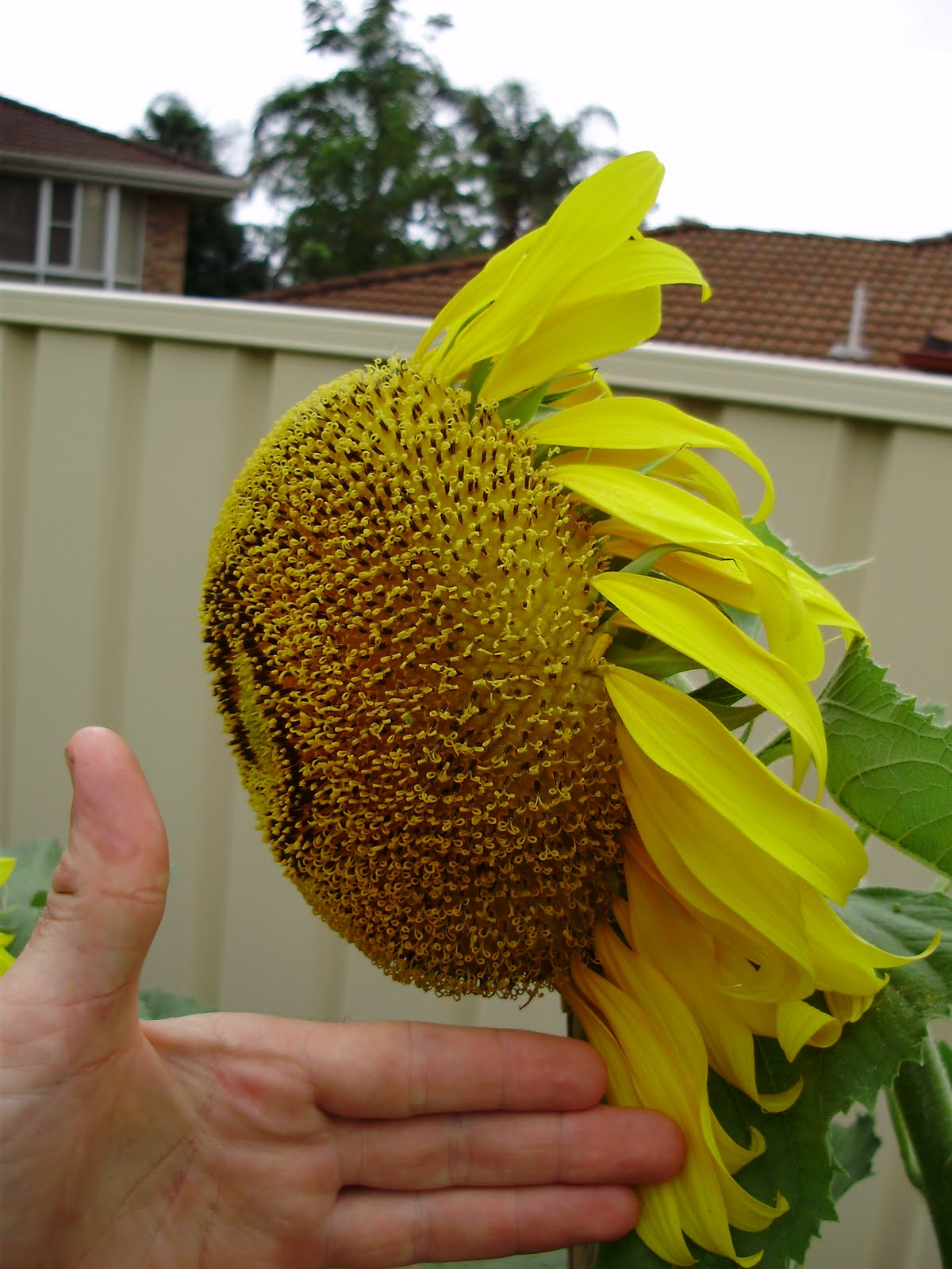 Eucharist (#7) | In A Spacious Place