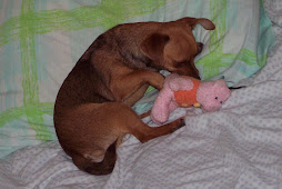 My Piggie