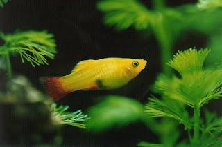 Fresh Water Aquarium fish: August 31, 2008