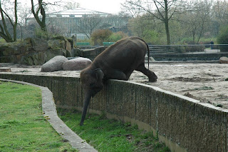 I took this picture... what a creative (or desperate) elephant! :)
