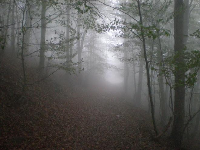 Desde la Niebla.