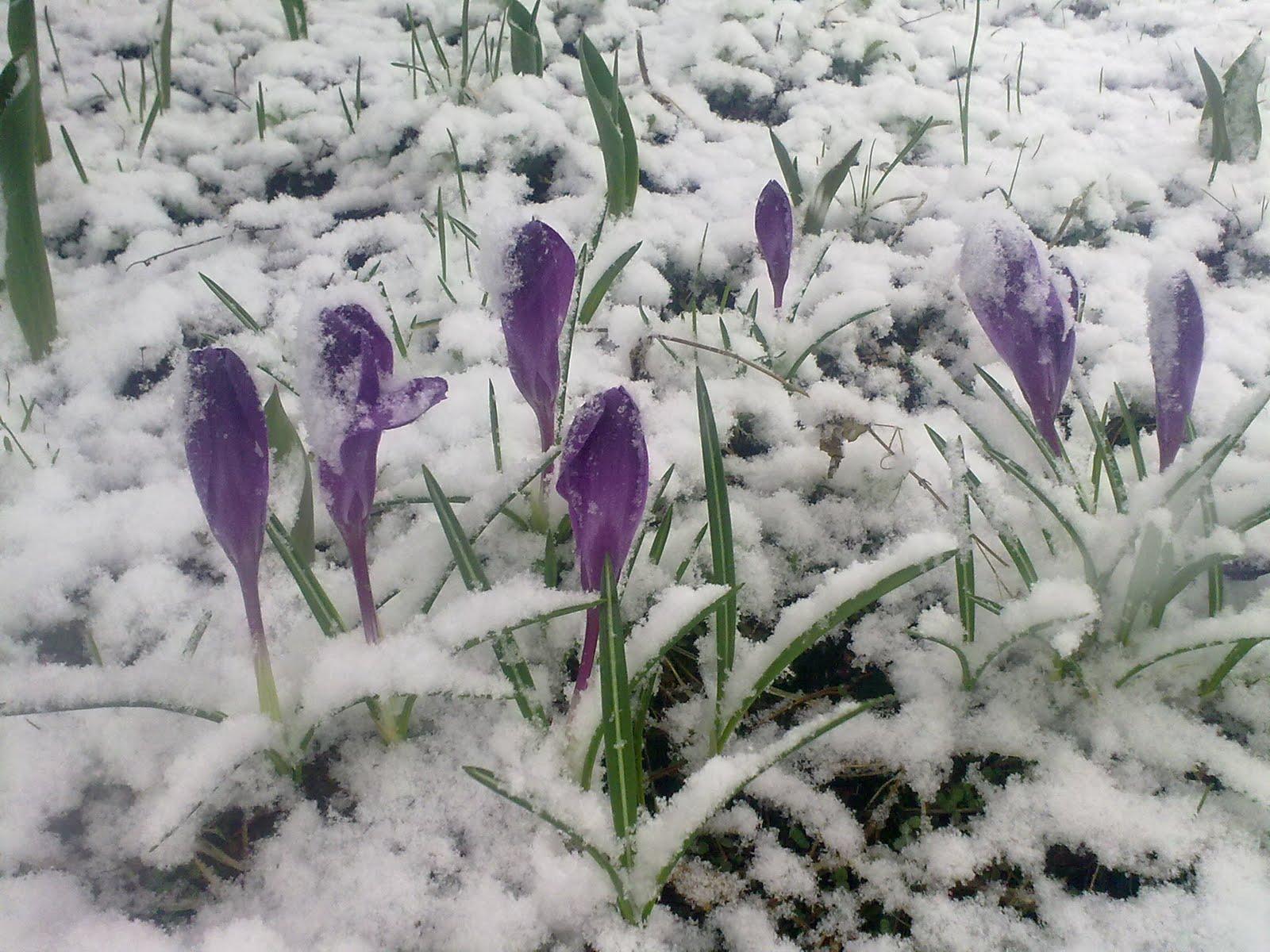 Bilderesultat for vår med snø