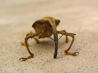 Cool+Rare+Bug Cool Rare Bug..