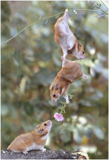 Squirrel+Love Squirrel Love!!