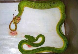 Snake+Birth Snake Birth!!