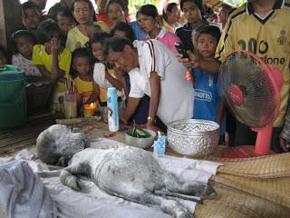 Unbelievable+Human like+Buffalo+Birth Unbelievable Human like Buffalo Birth!!