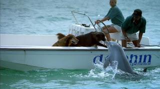 http://bp0.blogger.com/_J_FabKwqDxE/RzRr0J62hiI/AAAAAAAAB8k/Cy65or7UkIc/s320/Dolphin-Dog+Meeting.jpg