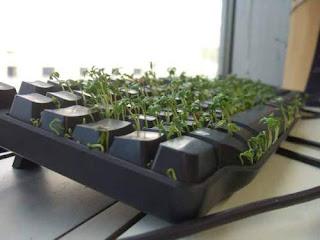 Garden+Keyboard Plant Keyboard!!