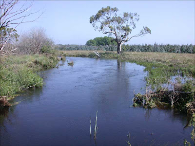 Darlot Creek November 2007