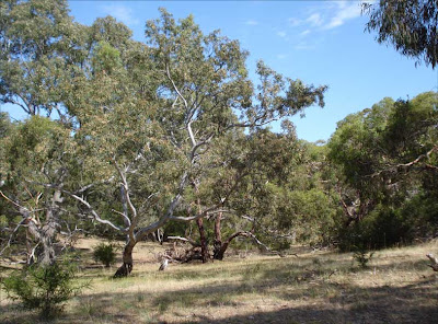 Inverleigh Common