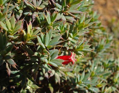 Cranberry Heath