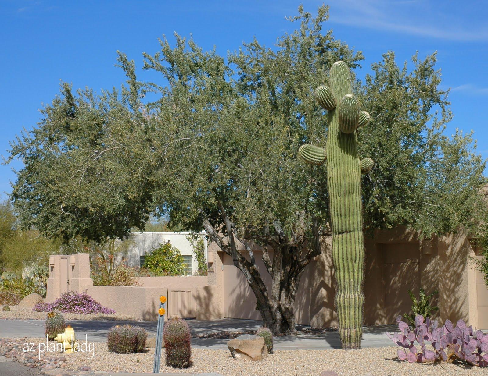 A Wonderful Dilemmapart 2 Ramblings From A Desert Garden