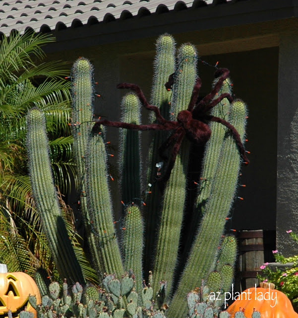 Cactus Decorated For Christmas: RAMBLINGS FROM A DESERT GARDEN....: October Craziness
