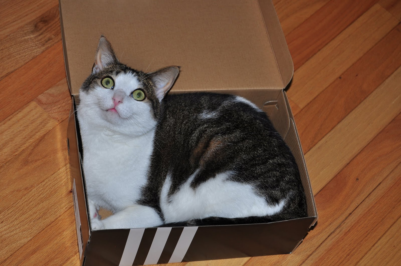 casual slack it 39 s just a cat in the box. Black Bedroom Furniture Sets. Home Design Ideas
