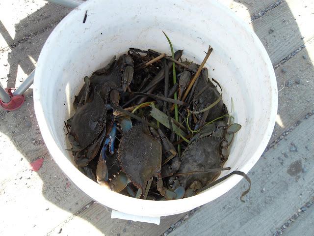 Indulge Inspire Imbibe: Here Craby Craby Craby
